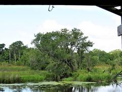 Rhodes Bayou 1275