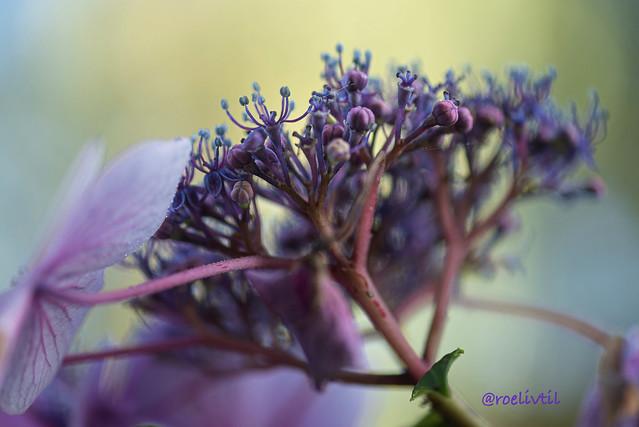 Paars / Purple