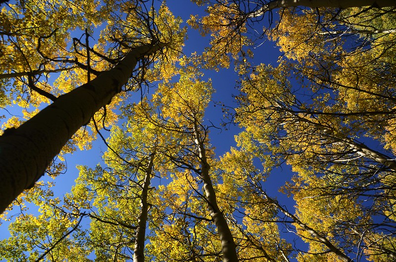 Wheeler Lakes Trail Hike (46)