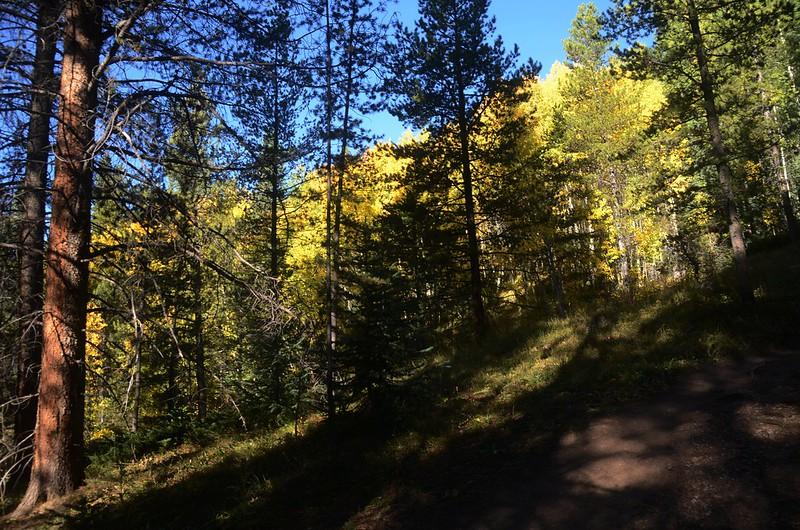 Wheeler Lakes Trail Hike (43)