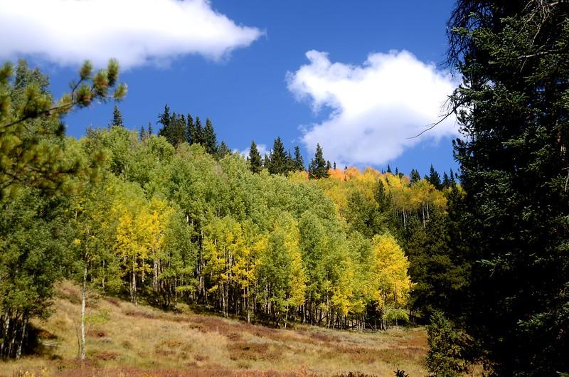 Wheeler Lakes Trail Hike (85)