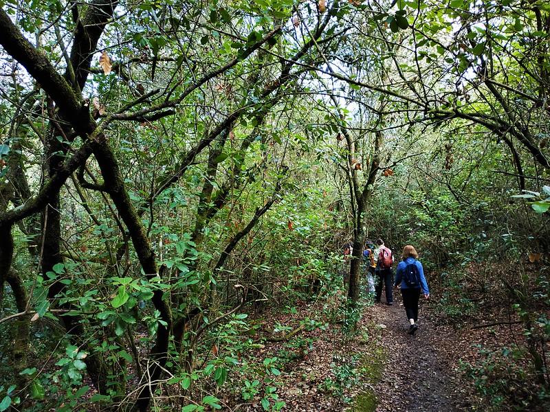 Natura als boscos de la Floresta (22/09/2021)
