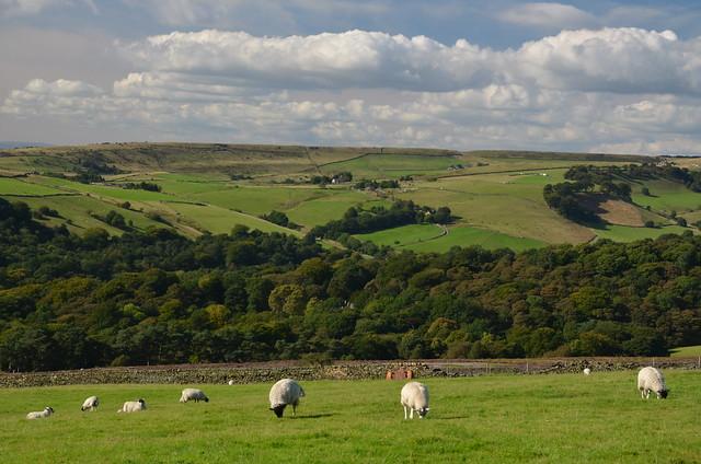 Rural Bliss, Peak District National Park, Hayfield, Derbyshire, England.