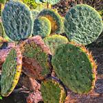 Le monde entier est un cactus