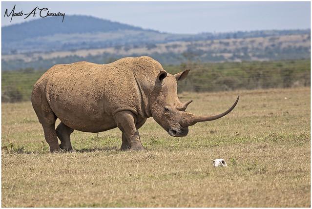 World Rhino Day 2021!