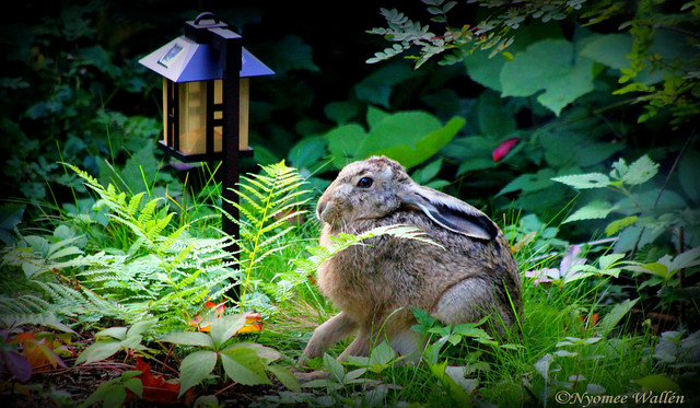 Mr. Charlie Rabbit