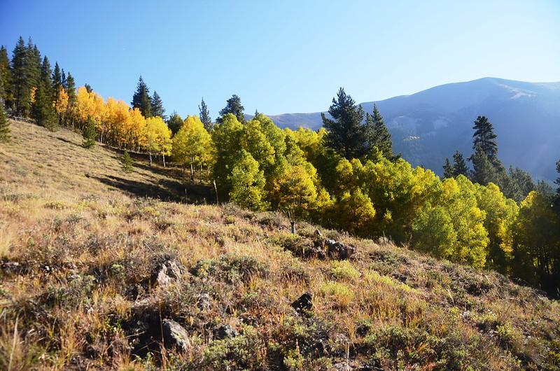 Wheeler Lakes Trail Hike (41)