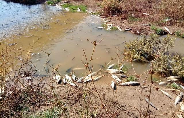 Río Guadaíra - Peces Muertos