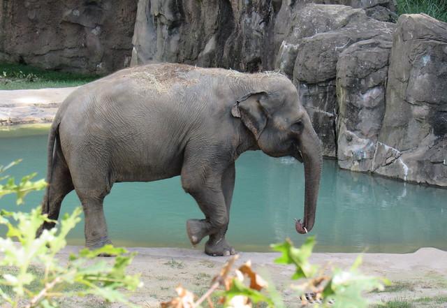National Elephant Appreciation Day-  September 22