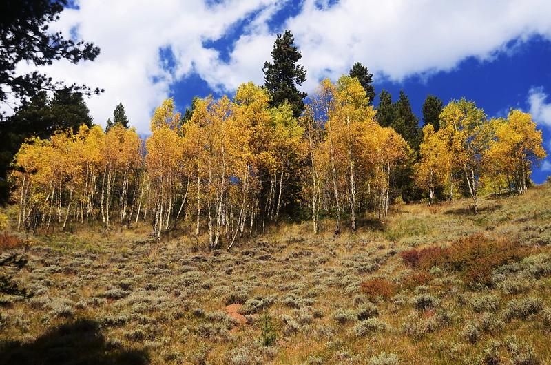 Wheeler Lakes Trail Hike (110)