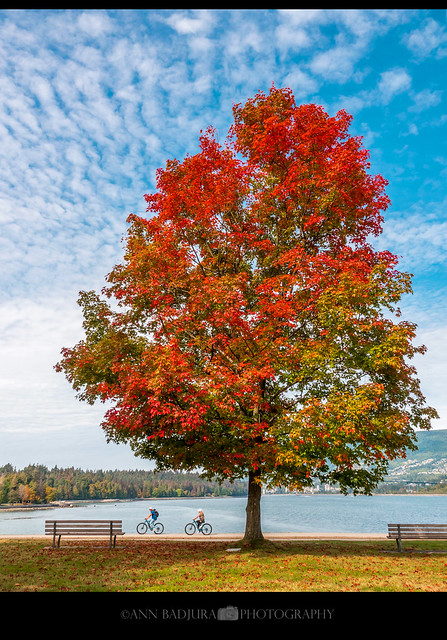 First signs of fall in Vancouver, BC, Canada