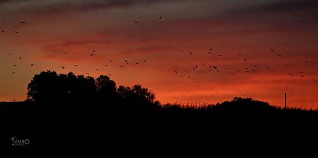 Alba di fuoco per la partenza dei gabbiani - Fiery dawn for the departure of the seagulls