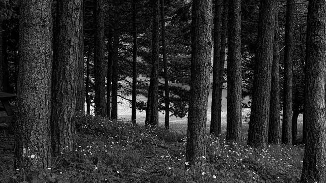 It's all so quiet (Umbria- Gualdo Tadino- Italy)