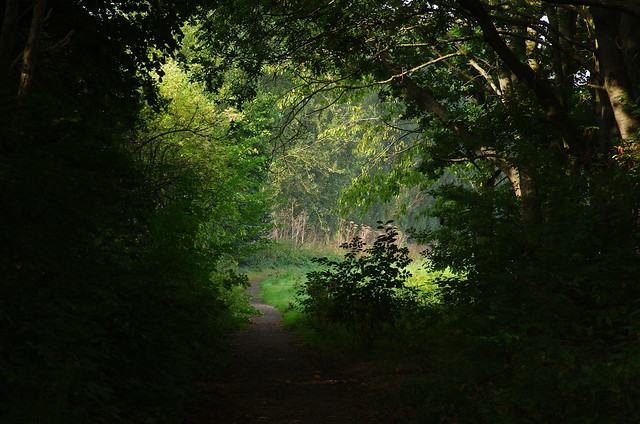 Through the old cherry orchards, towards Clock House, Brenley