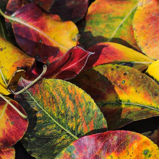 A Burst Of Colours