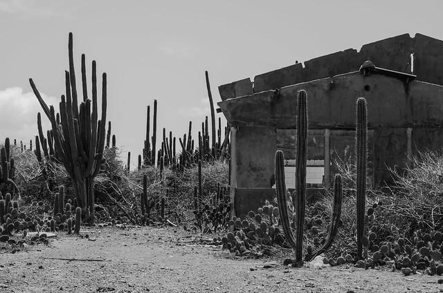 Desert(ed)