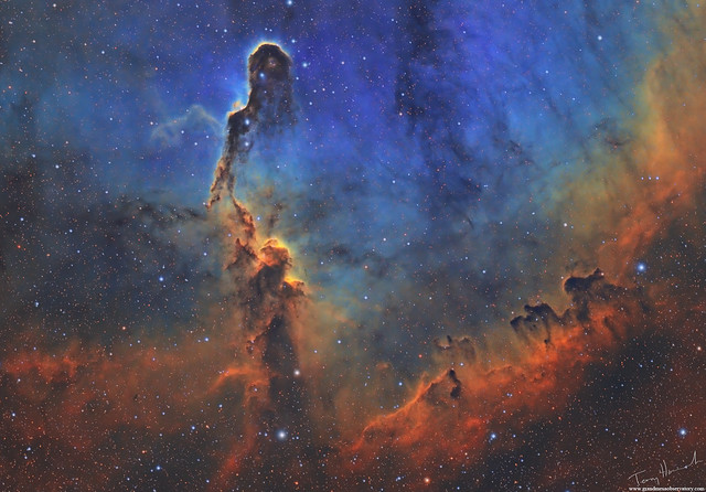 The Towering Trunk IC1396