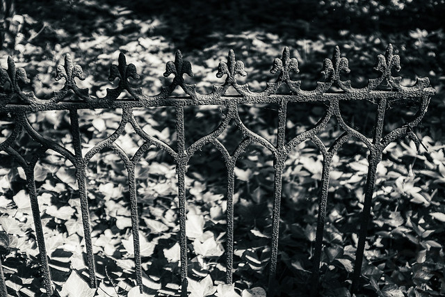 Zaun --- Fence