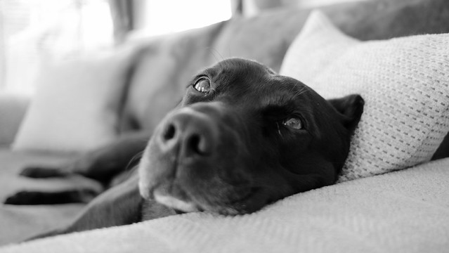 Lazy Sunday morning