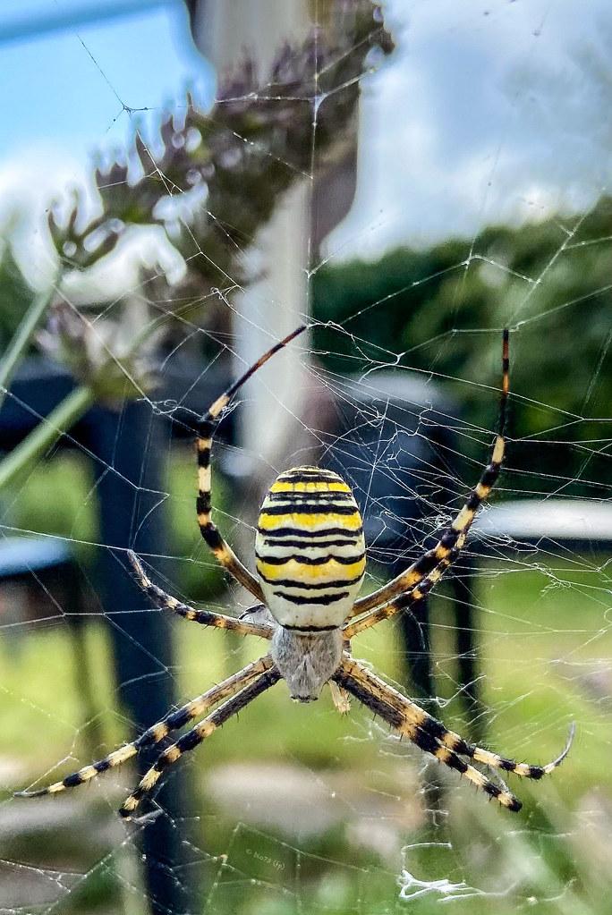 Il ragno passa il tempo a rammendare l'aria. (Fabrizio Caramagna)
