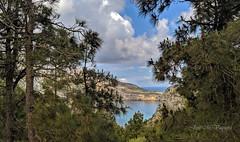 Barranco de los pinos canarios (Ceuta) / Canary pines ravine (Ceuta)