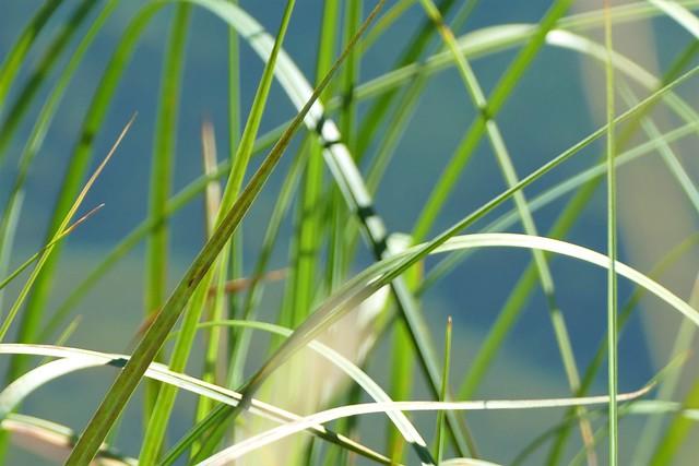 09.22.21.Nature Verte