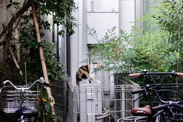 Today's Cat@2021−09−22