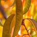 Autumn Leaves, 10.11.19