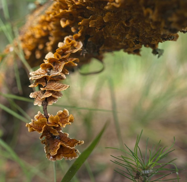 tree fungus next to pine sapling