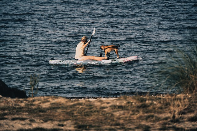 Dog with woman on the Baltic Sea - Fehmarn - Schleswig-Holstein - Germany - September 9, 2021