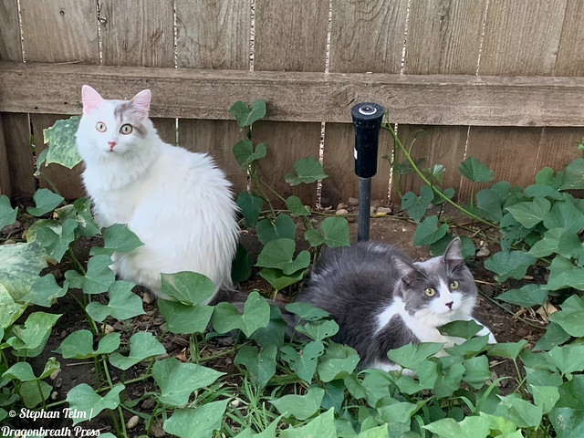 The potato, yam and cat patch