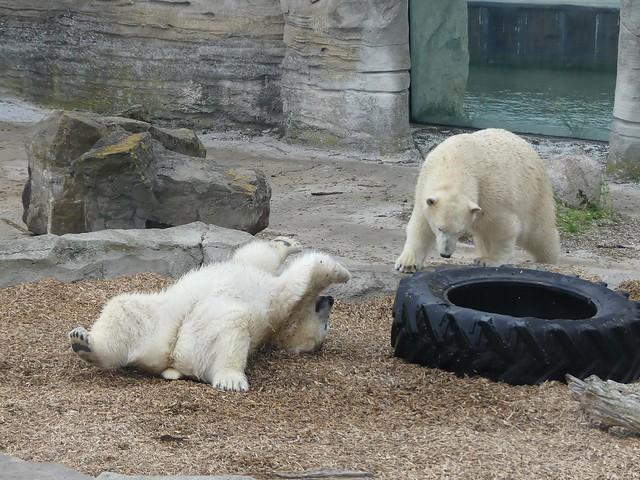 Zoo am Meer Bremerhaven