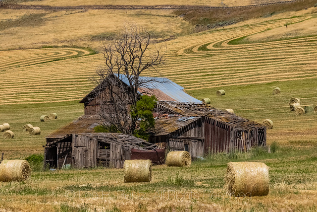 Wooden Barn and Hay Field in Washington State