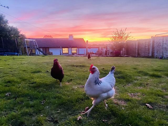 Egg-cellent sunset