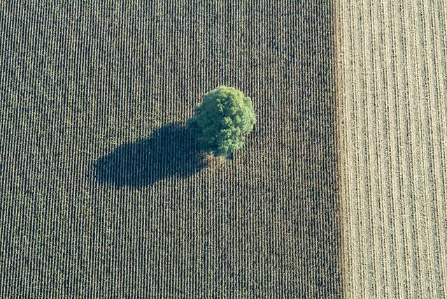 Single Tree - 14