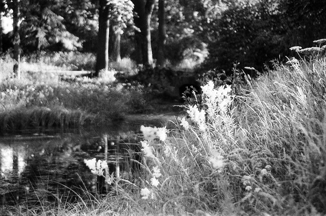 In the park by the pond (Vivitar's soft focus)