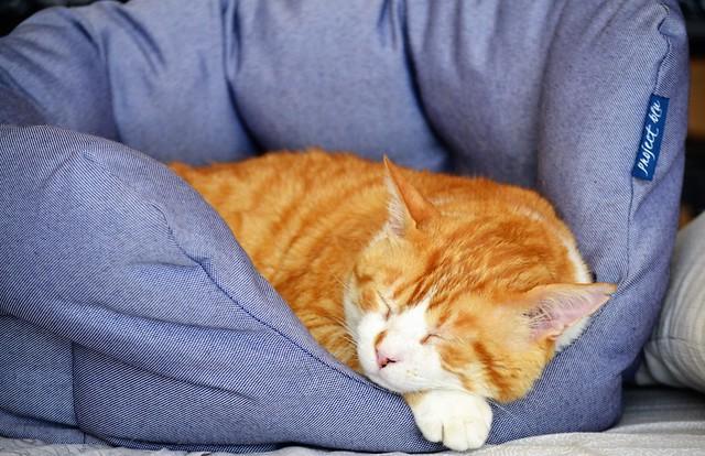 Gino, my model cat 😎