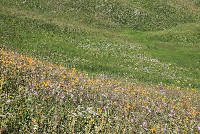 Italy / South Tyrol - Armentara Meadows