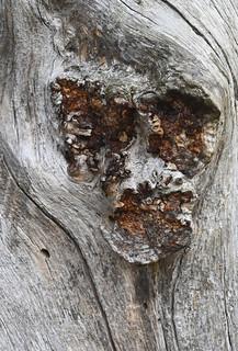 Close up - tree's face