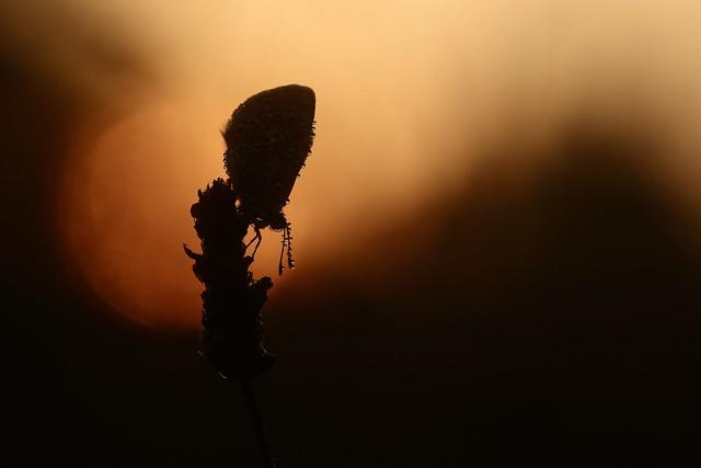 IMG_2174 - A l'aube