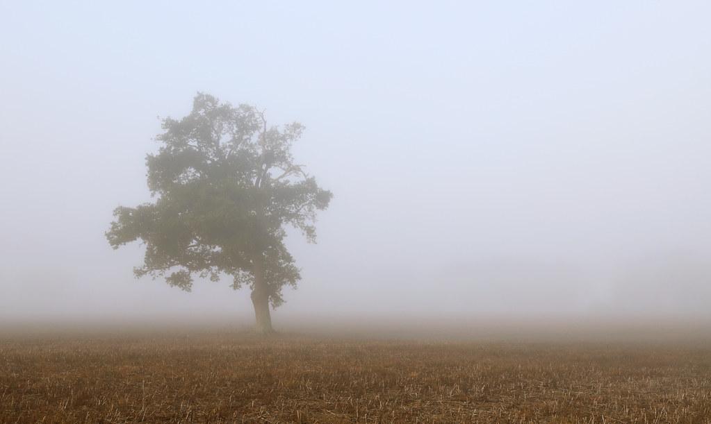 2021 09 22 Bepton oak in a field of mist