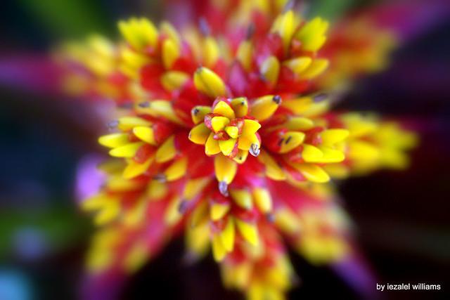 Flower Natural Geometry - IMG_0063-009