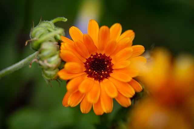 Little orange blossoms