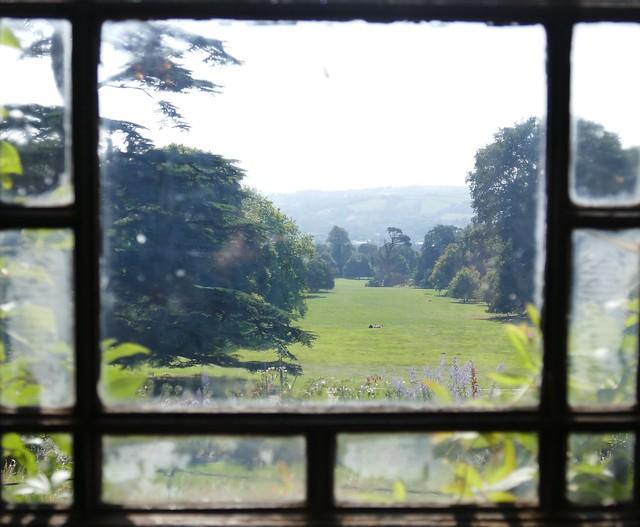 Garden Through the Window