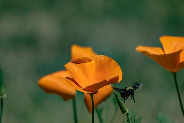 Bee and Poppy 2021 06 12 07