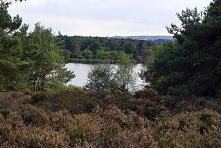 Landscape - Frensham Little Pond