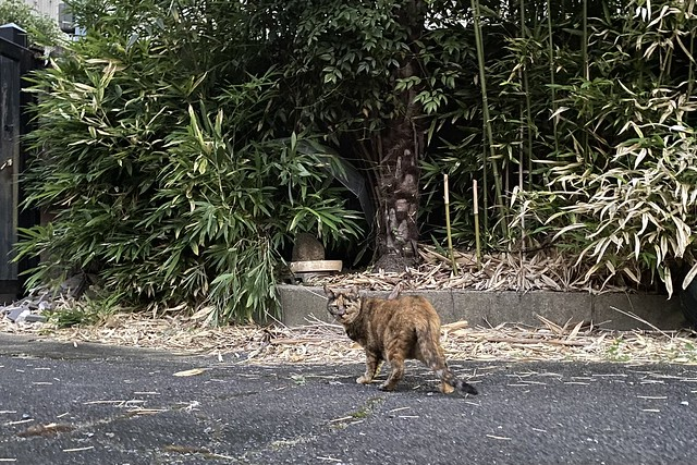 Today's Cat@2021−09−23
