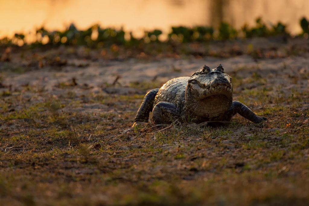 No Pantanal