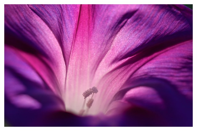 La belleza sin inteligencia es sólo decoración.
