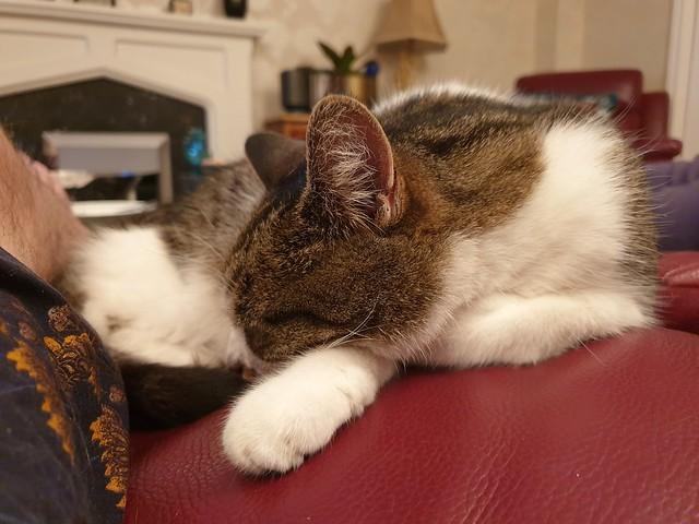 Snoozing cat 2